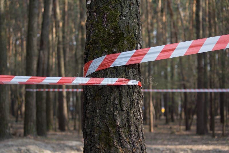 Verhinderung eines rot-weißen Abzugsgrabens auf Bäumen lizenzfreies stockbild