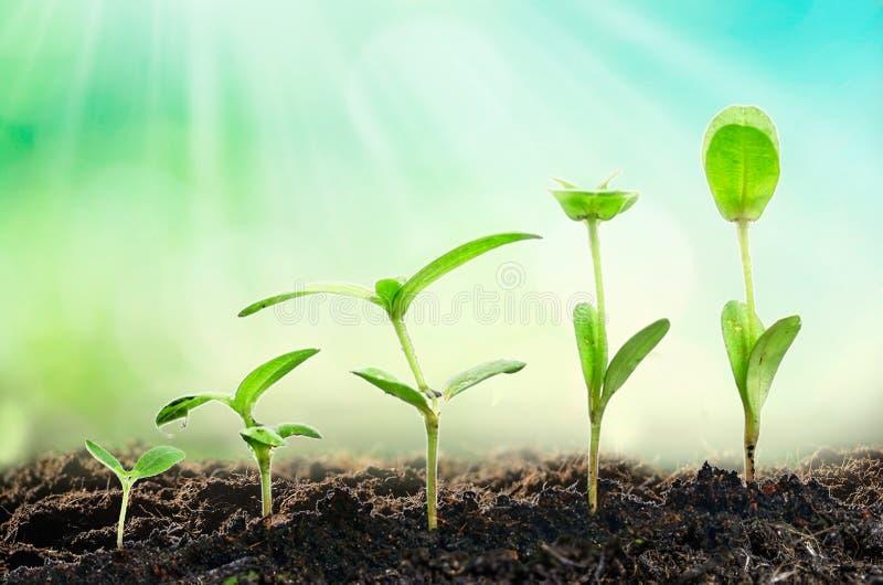 Verhoging van de bedrijfssucces de groeiende groei op concept kweek installaties en exemplaarruimte voor uw tekst royalty-vrije stock afbeelding