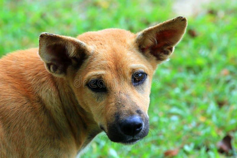 Verhungernder streunender Hund lizenzfreie stockbilder