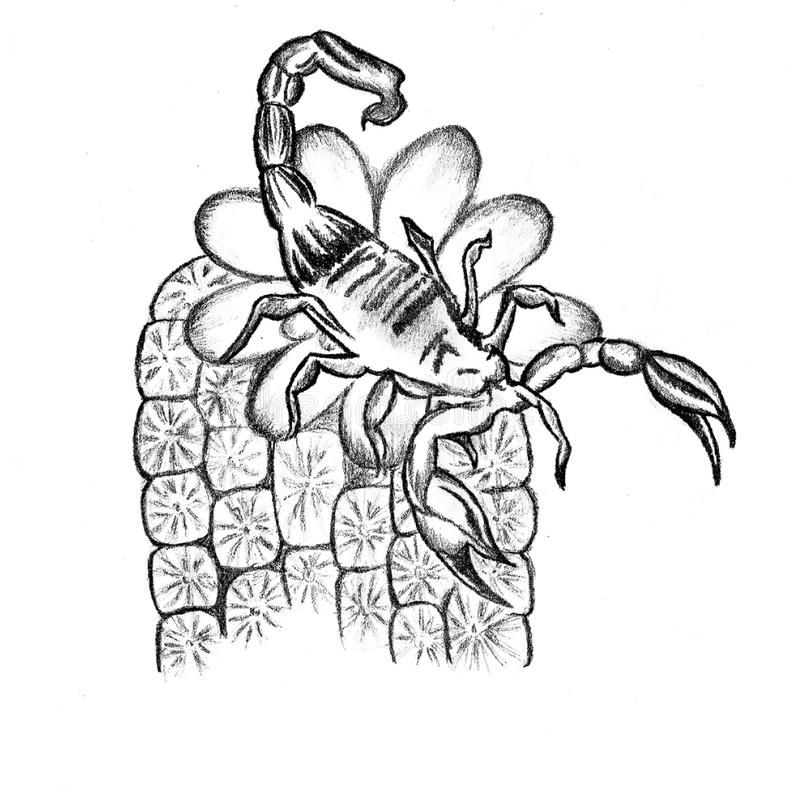 Veri nice sketch of the scorpion. There is a picture of the scorpion on flower. Nice sketch in jpg format stock illustration