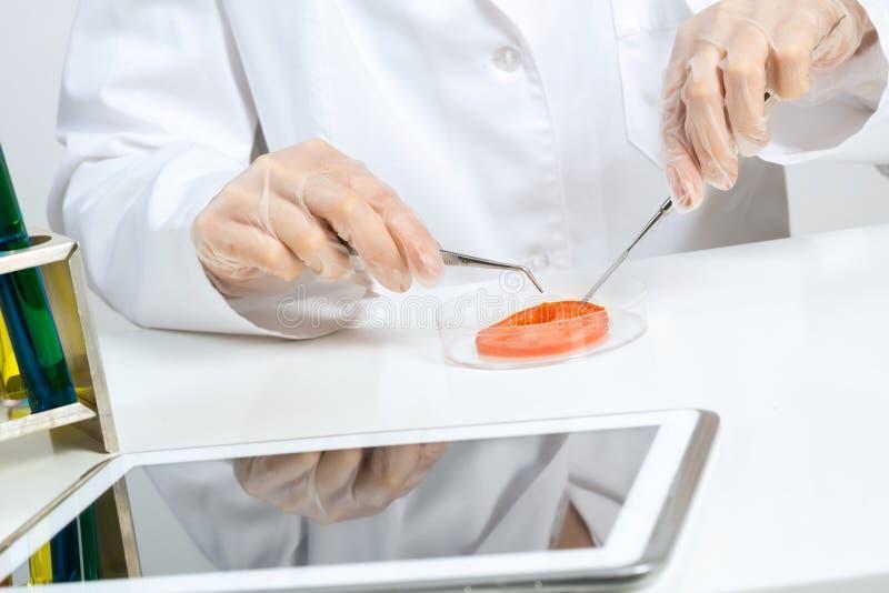 Verificação de GMO foto de stock