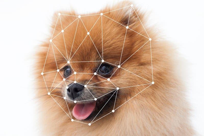 Verifikation av hunden Modern teknologi för inhemska husdjur för skydd arkivfoto