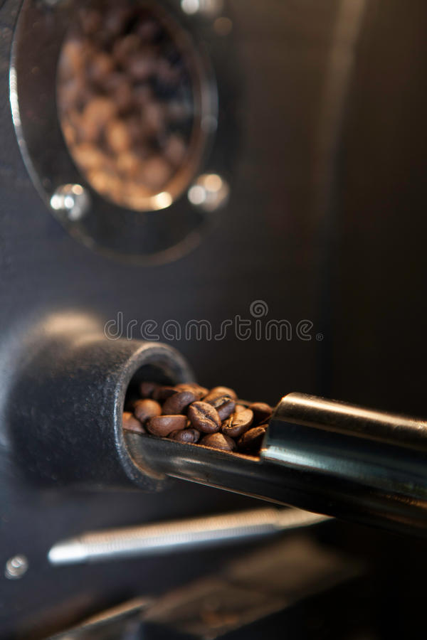 Verifying aromatic coffee beans - closeup royalty free stock photos
