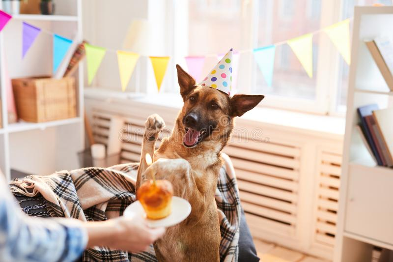 Verjaardagscake voor hond royalty-vrije stock afbeeldingen