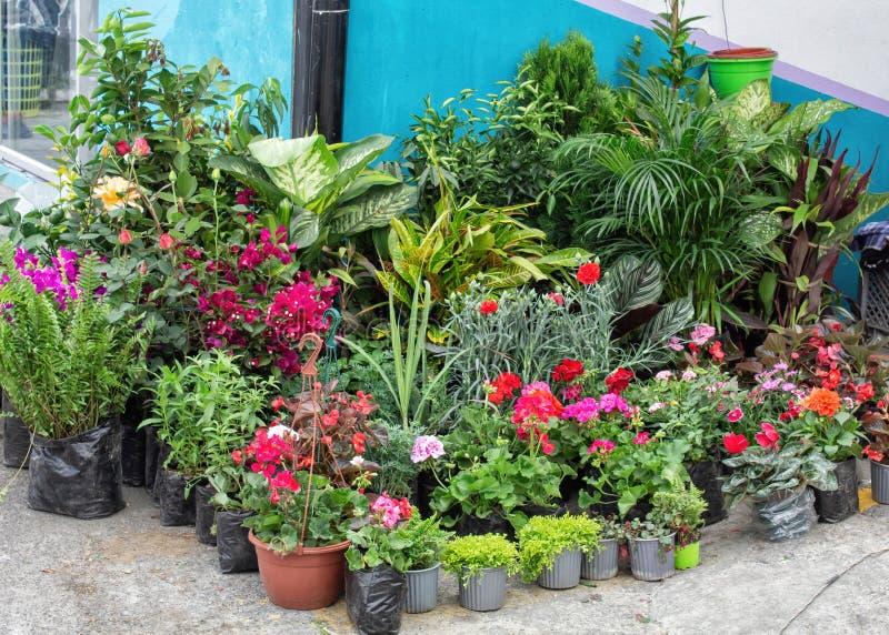 Verkauf von Blumen in den Töpfen auf dem Markt lizenzfreie stockfotos