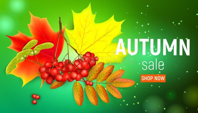Verkaufsfahne mit Ahornherbstlaub und -eberesche verzweigt sich mit ashberry auf einem grünen Hintergrund Herbstahornblatt und vektor abbildung