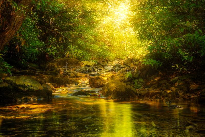 Verkeerder Kill in Minnewaska reserve, Upstate New York. Sun rays burst through forest foliage along Verkeerder Kill in Minnewaska reserve, Upstate New York royalty free stock photos