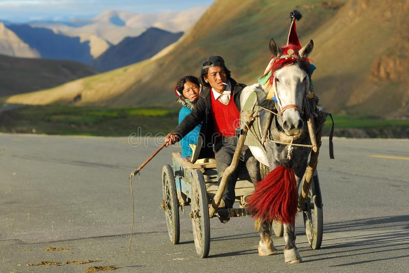 Verkehrsmittel, Pferdegeschirr, Fahrzeug, Pferd wie Säugetier lizenzfreies stockfoto