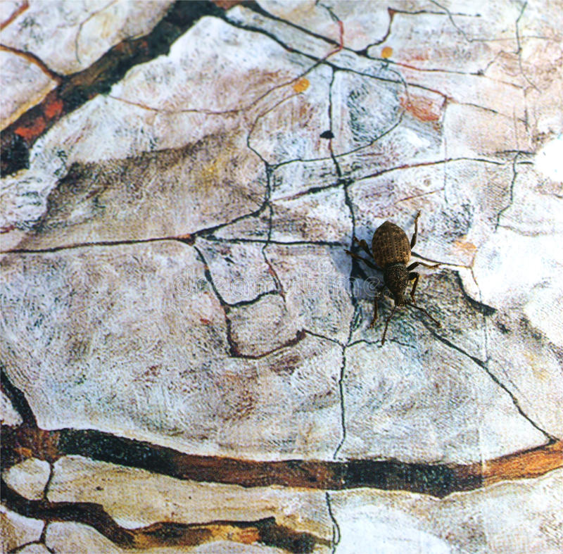Verkleideter Käfer stockfoto