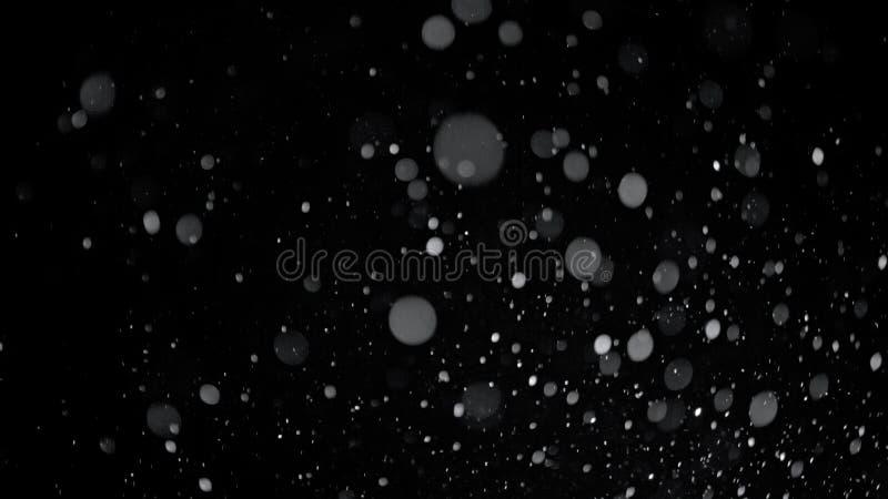 Verklig fallande snö på en svart bakgrund arkivfoton