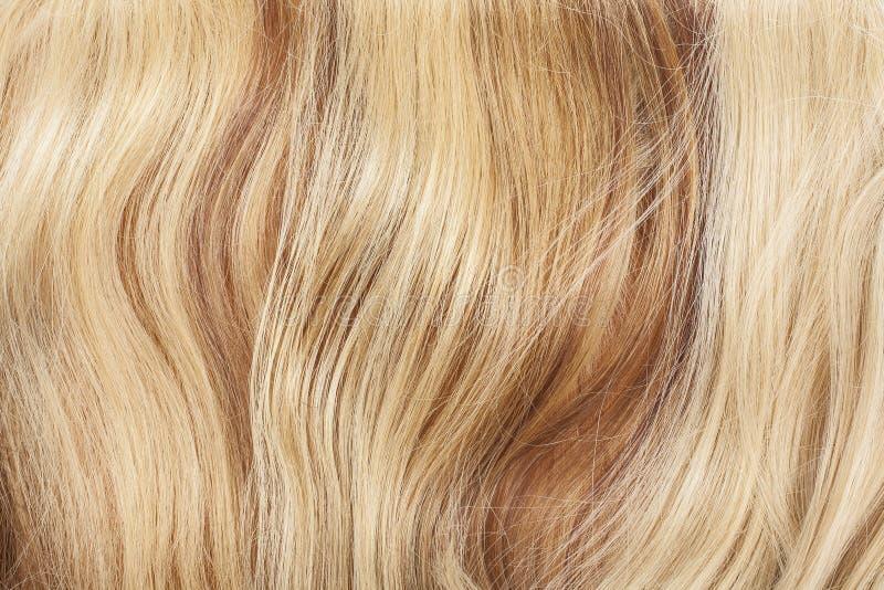 Verklig hårcloseup Foto för makro för hårtexturmodell Mänsklig europeisk förlängning för hår för kvinna` s royaltyfria foton