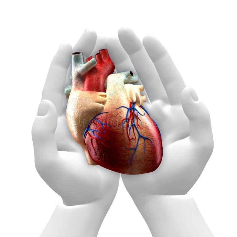 Verklig hjärta i händer royaltyfri illustrationer