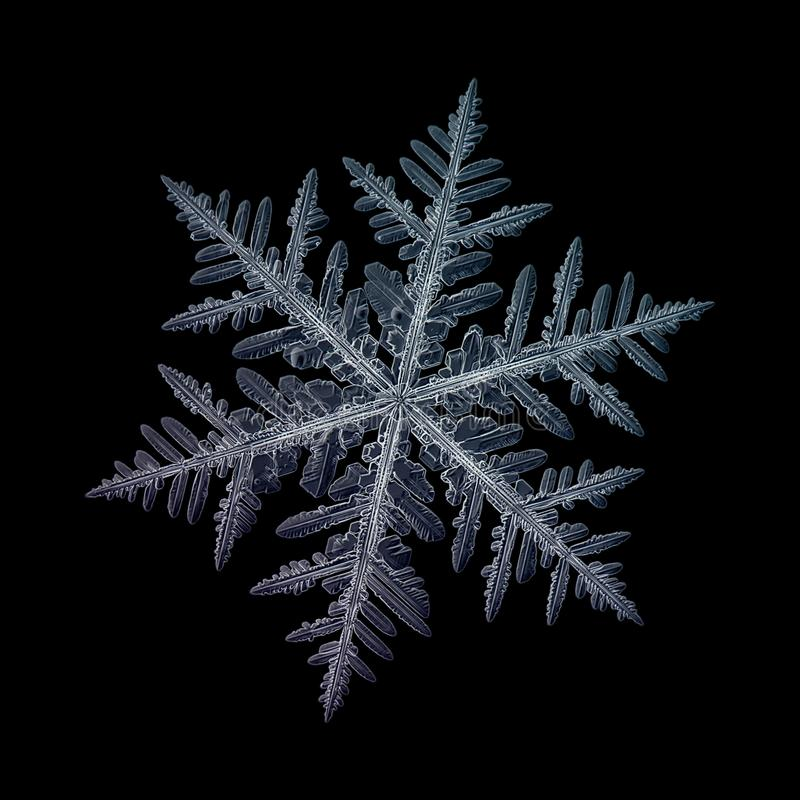Verklig snöflinga som isoleras på svart bakgrund fotografering för bildbyråer