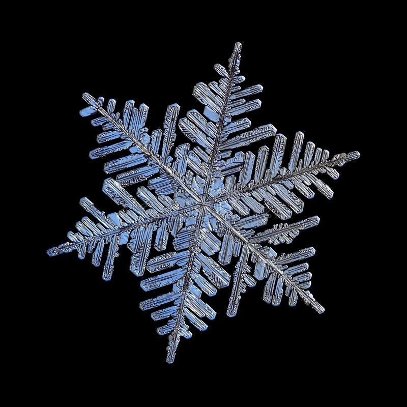 Verklig snöflinga som isoleras på svart bakgrund royaltyfri fotografi