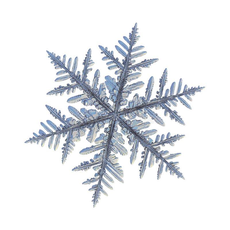 Verklig snöflinga som isoleras på vit bakgrund royaltyfria bilder