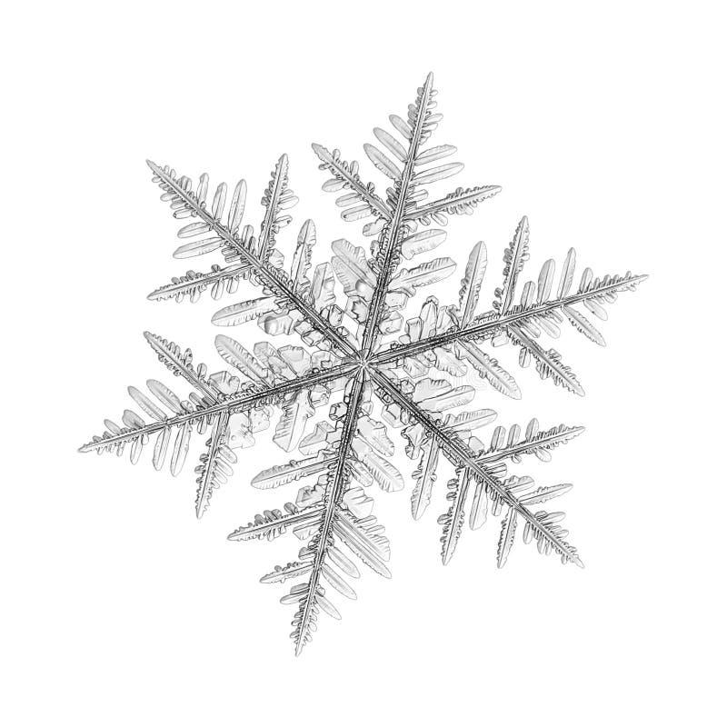 Verklig snöflinga som isoleras på vit bakgrund royaltyfri fotografi
