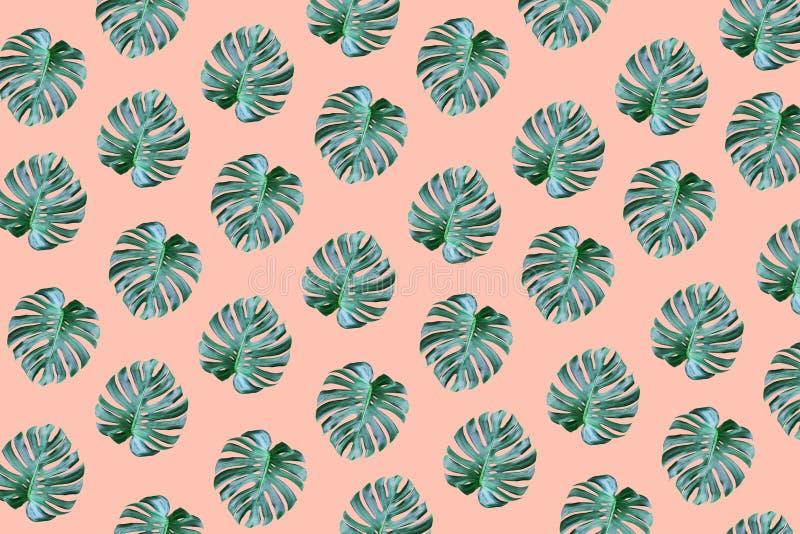 Verklig tropisk design för monsterasidamodell på pastellfärgad färg arkivbild