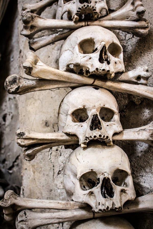 Verkliga mänskliga skallar som ordnas med ben arkivbild