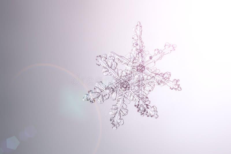 Verkliga naturliga ljusa snöflingor på en glass makro royaltyfri fotografi
