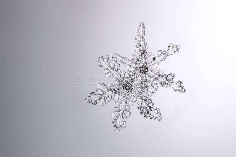 Verkliga naturliga snöflingor på ett vått glass makrofoto fotografering för bildbyråer