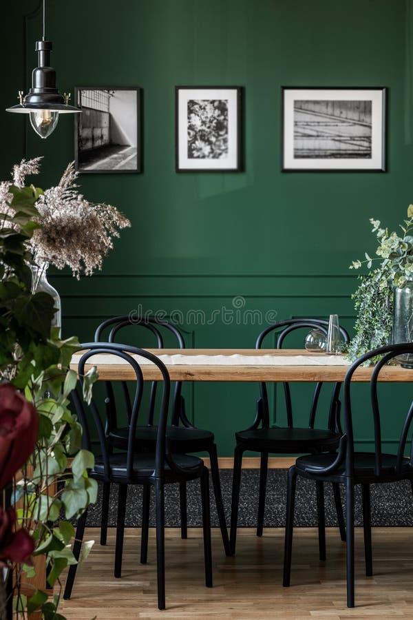 Verkligt foto av svarta stolar som står på en trätabell i elegant matsal som är inre med inramade foto på den gröna väggen royaltyfri bild