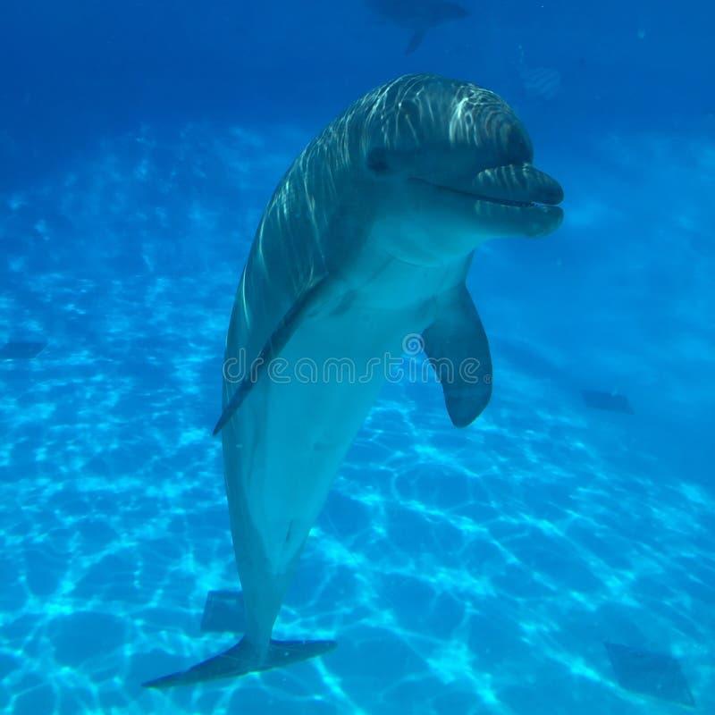 Verkligt härligt naturligt blåttleende för delfin arkivbild