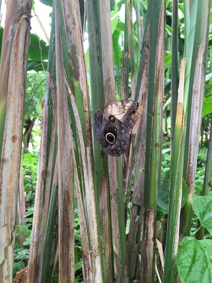 Verkligt härligt naturligt för fjäril arkivbilder