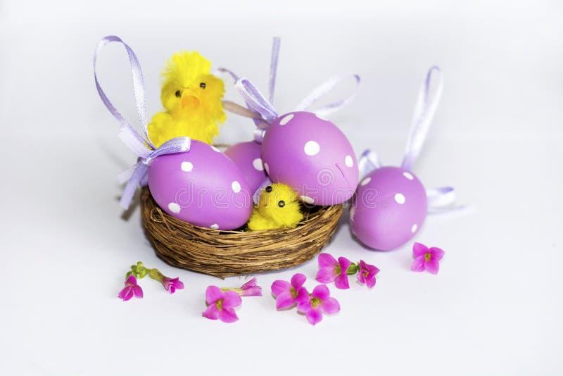 Verkligt rede med purpurfärgade easter ägg fotografering för bildbyråer