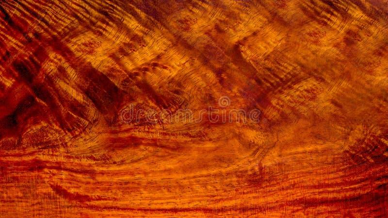 Verkligt trä har tigerbandet eller lockigt bandkorn, royaltyfri bild