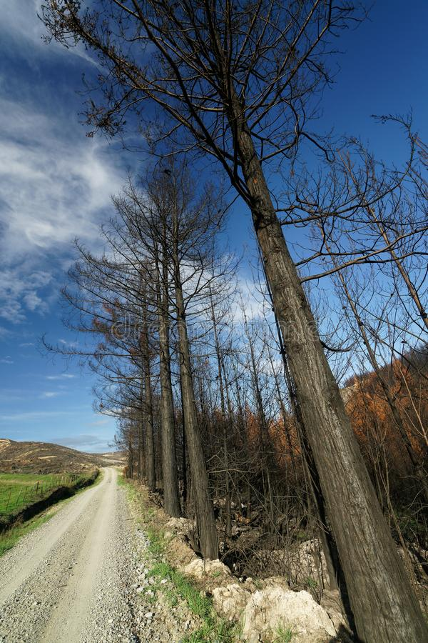 Verkohlte Bäume nach einem Waldbrand, Wakefield, Neuseeland lizenzfreies stockfoto