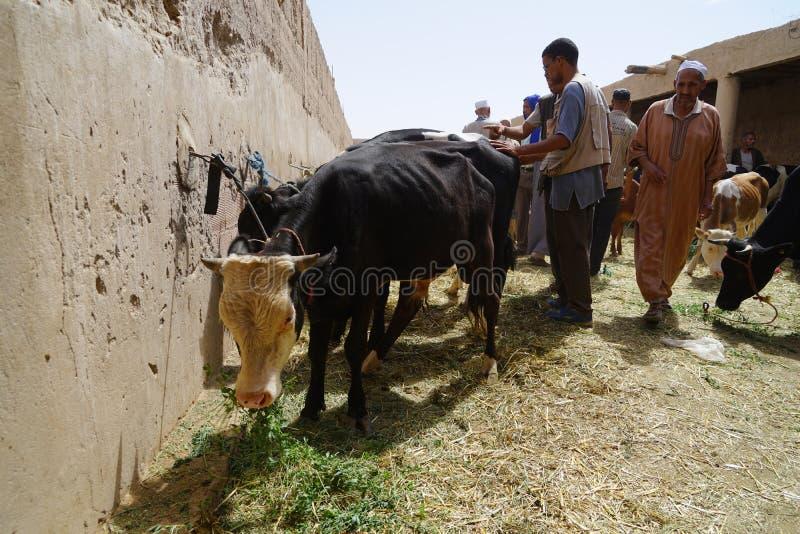 Verkoperskoeien in souk van de stad van Rissani in Marokko stock foto