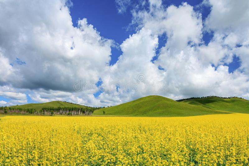 Verkrachting op de prairie stock foto's