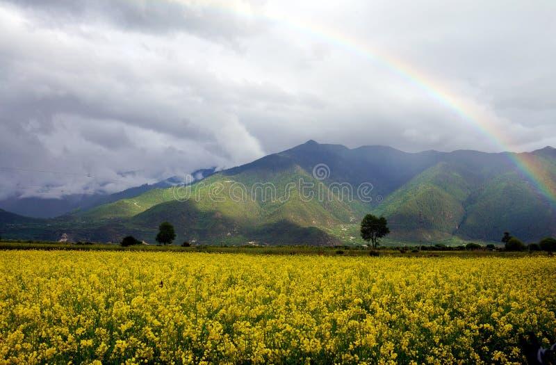 Verkrachtingsbloemen en regenboog royalty-vrije stock afbeelding