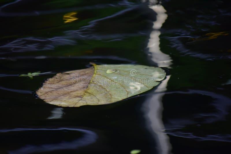 Verlaat het drijven boven het water in de pool daar zijn bezinningen en watergolven royalty-vrije stock afbeeldingen