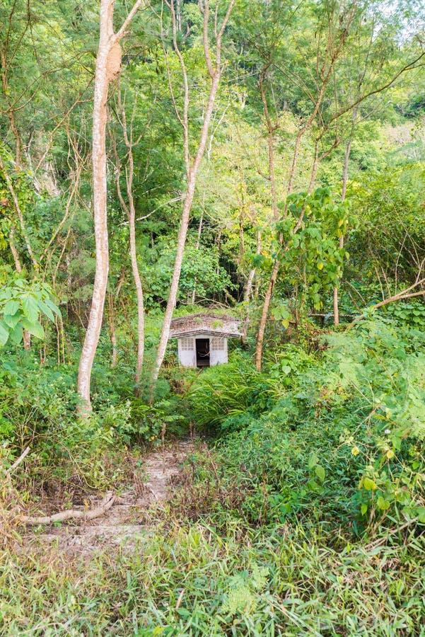 Verlaat toilet in bos stock afbeeldingen