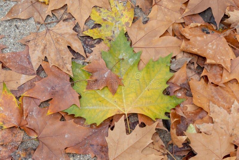 Verlassen Sie im Herbst lizenzfreies stockfoto