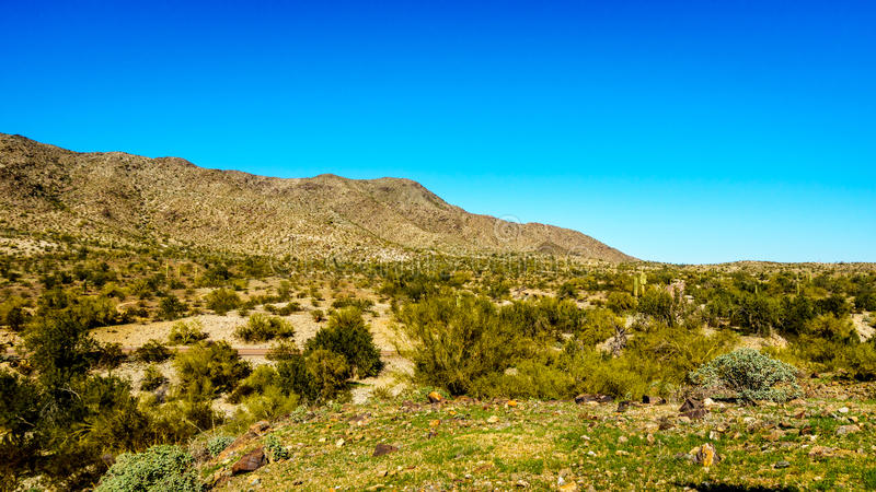 Verlassen Sie Landschaft mit Saguaro und Fass-Kakteen entlang dem Bajada-Wanderweg in den Bergen des Südgebirgsparks lizenzfreie stockfotos