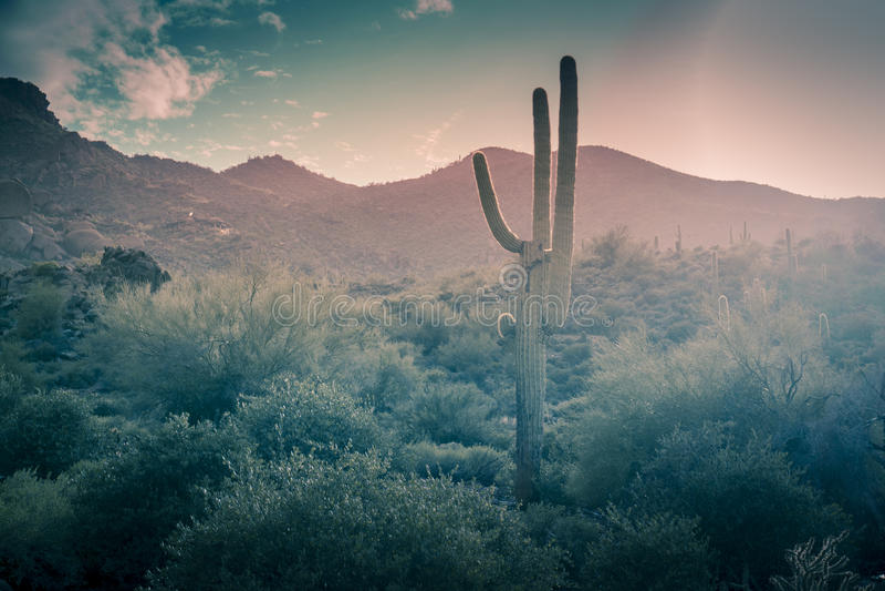 Verlassen Sie Landschaftsregen Phoenix, Arizona, USA stockbild