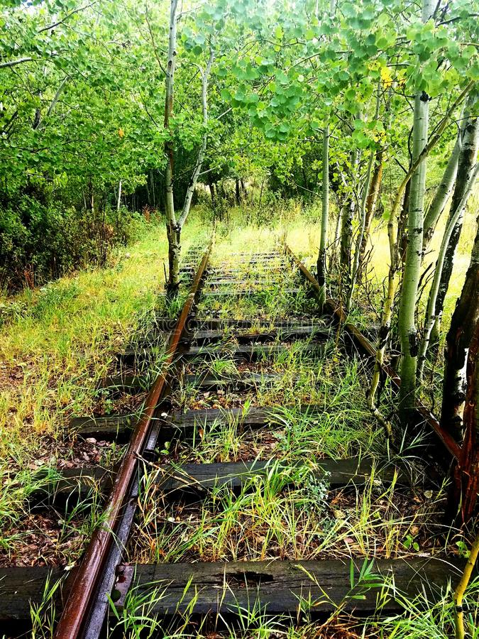 Verlassene Eisenbahn bedeckt im Grün lizenzfreie stockfotos