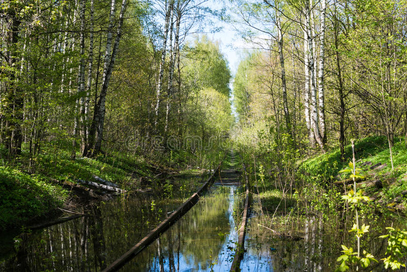 Verlassene Eisenbahn im Wald stockfotografie