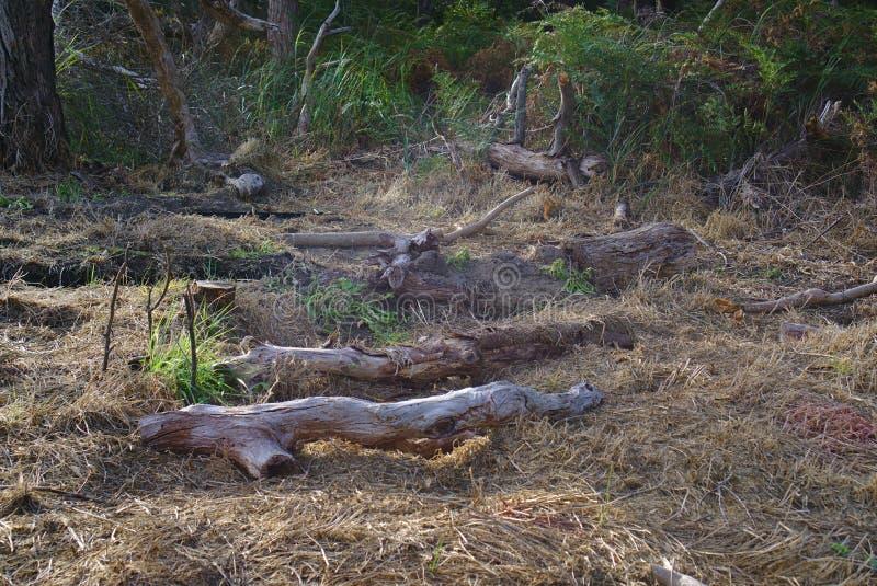 Verlassene gehackte Bäume stockbild