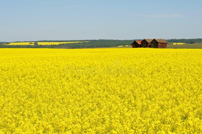 Verlassene Getreidespeicher auf dem Canolagebiet stockfoto