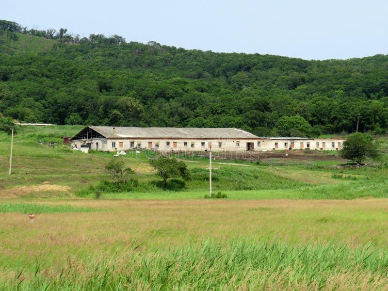 Verlassener Bauernhof nahe dem Wald stockbild
