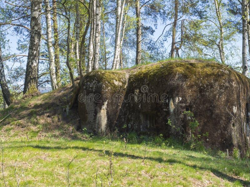 Verlassener konkreter Bunker Ropik des Zweiten Weltkrieges im Suppengrünwald in den lusitian Bergen nahe Tschechischer Republik D stockfoto