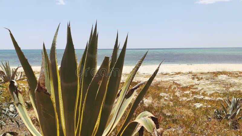 Verlassener Strauch auf dem Strand mit Seeansichten lizenzfreies stockbild