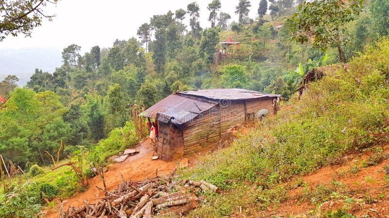 Verlassenes Häuschen errichtet im dichten Wald stockbilder
