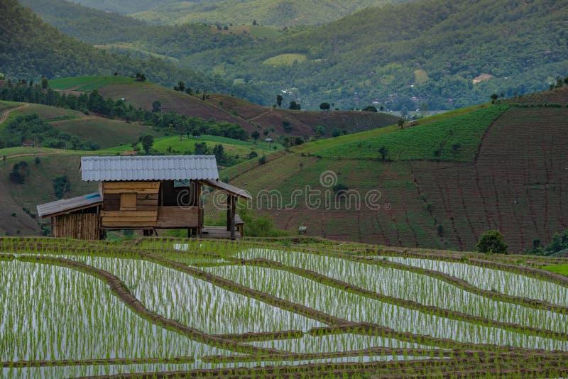 Verlassenes hölzernes Kabinenhaus in der Mitte des Reisfelds auf Dämmerung setzt Zeit Sonnenunterganglandschaft fest stockbilder