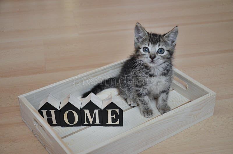 Verlassenes Kätzchen, das nach ihrem neuen Haus sucht lizenzfreie stockfotos