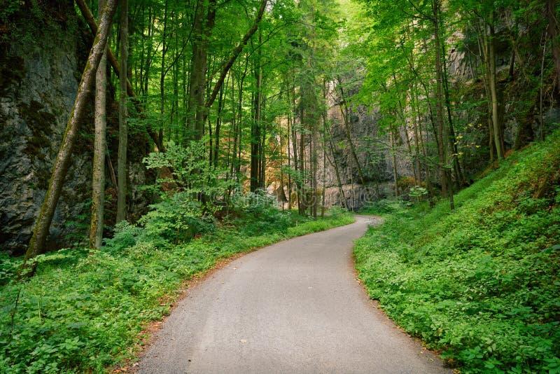 Verlaten asfaltweg in een donkergroen bos stock fotografie