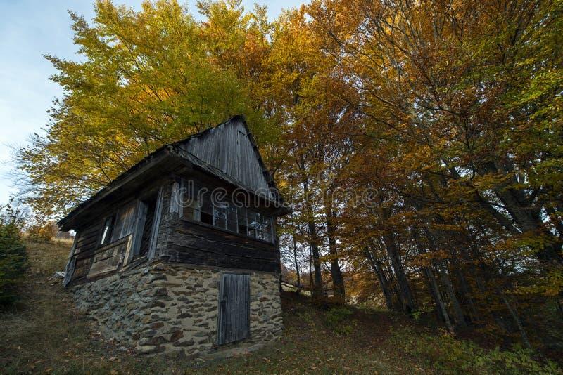 Verlaten blokhuis in het bos royalty-vrije stock afbeelding